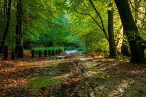 Autumn at Leith Hill, Surrey