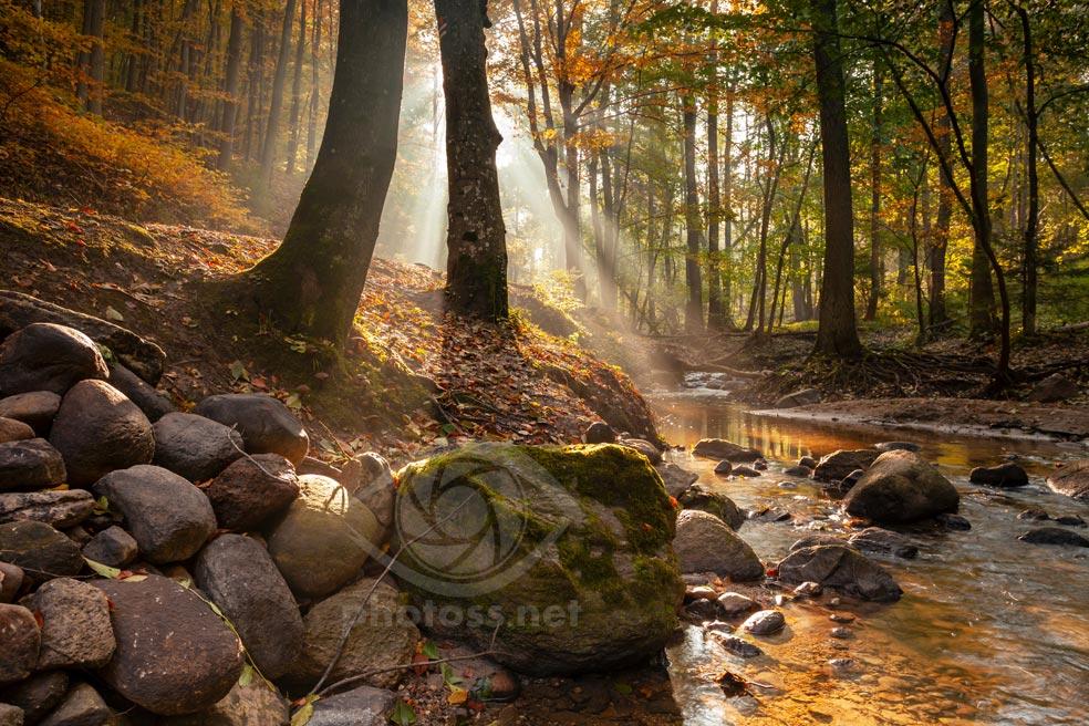 Autumn in the Forest, Gdynia, Poland. Slawek Staszczuk Photography.