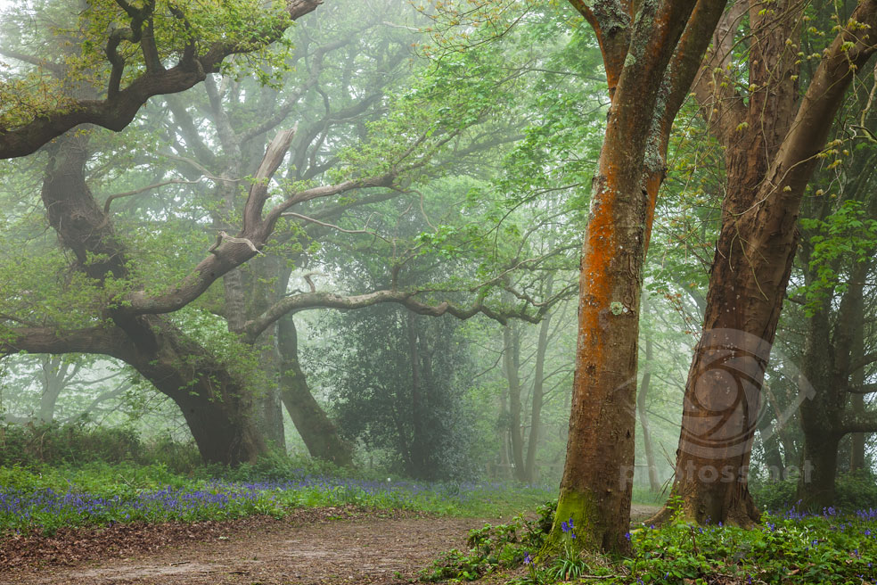 Misty Woodland. Sussex Landscape Photography.