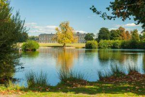 Petworth Park. Sussex Landscape Photography.