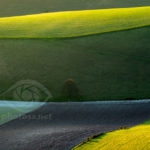 Spring on South Downs. Commended in LPOTY 2011