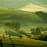 South Downs in spring. Commended in LPOTY 2011