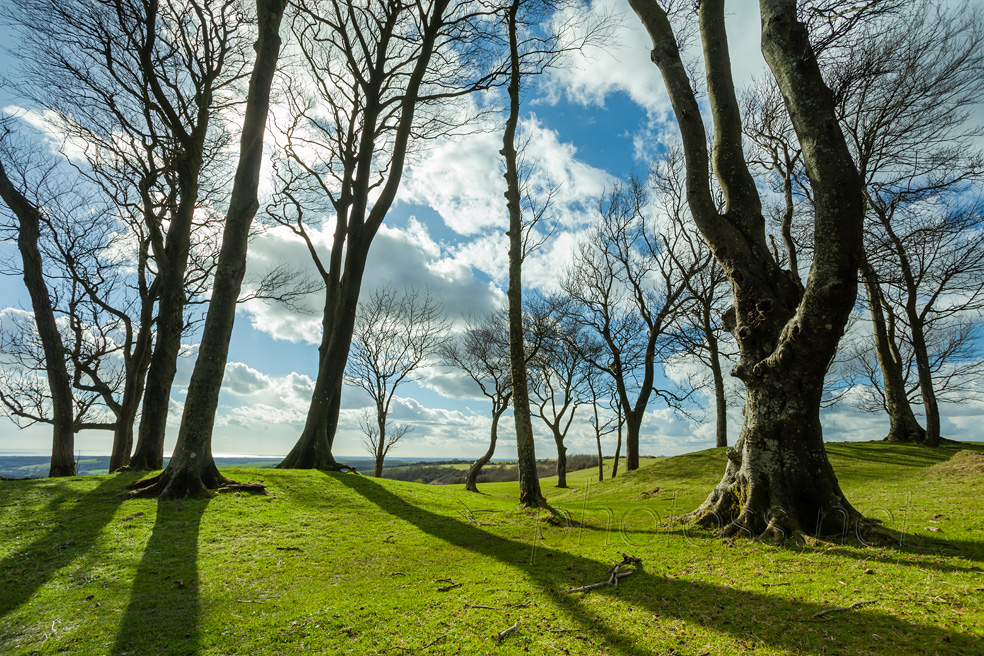 Sussex Landscape Photography Workshops South Downs. Freelance Photographer Brighton.