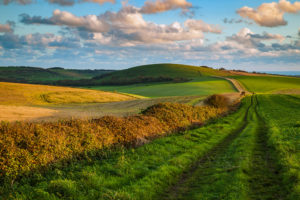 South Downs Photography. Professional Photographer in Sussex.