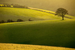 Sussex Landscape Photography. South Downs in Winter.