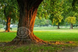 Krakow Park, Poland. Landscape Photography & Tuition Sussex UK.