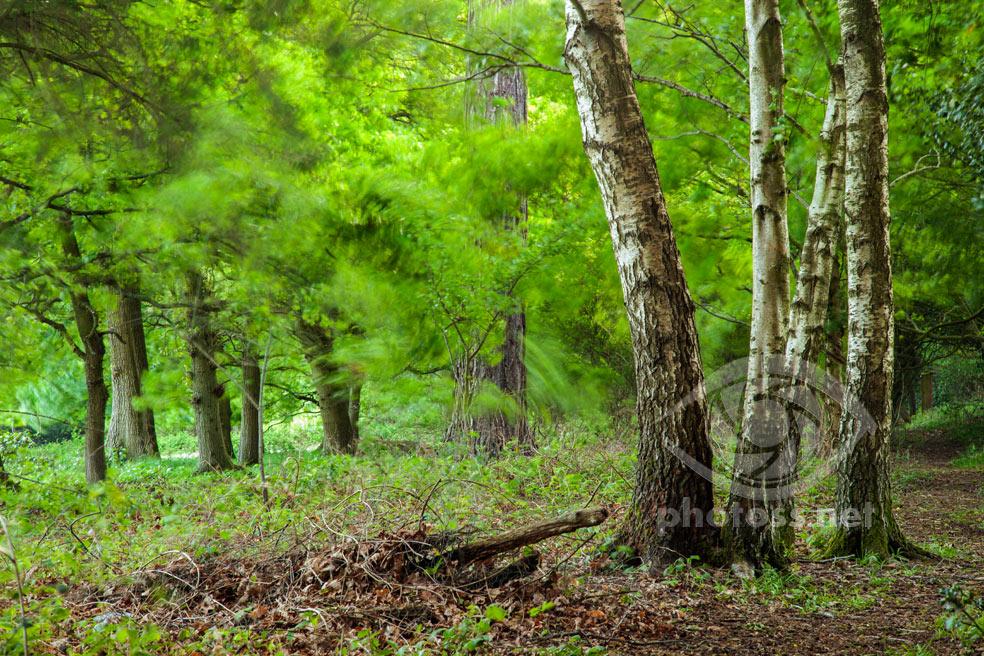 How to photograph woodlands. Landscape & Travel Photography Slawek Staszczuk.