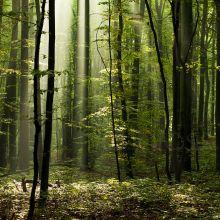 Misty Forest in Gdynia. Slawek Staszczuk Photography.